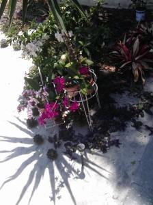 Tori Beach Blooms